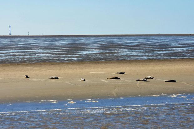 Mit der MS Flipper zur Seehundbank :: wolkenmond :: Unterwegs - mein ...